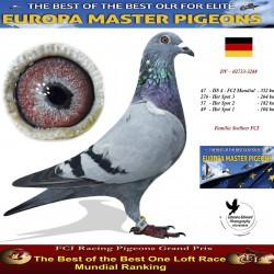 Auction 02733-3288 DV - Familie Soellner FCI - Locul 1 AS FCI