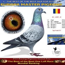 Auction RO-670037- 20 - Gigi Necula FCI