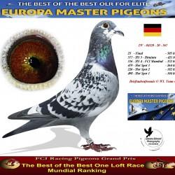 Auction DV-04320-20-567 - Brieftaubenfreunde O WL Team 4