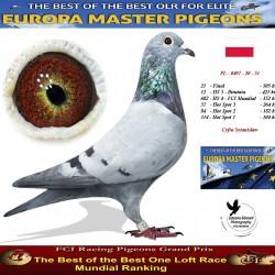 Auction PL-0497-20-51 - Cyfra Sytanislaw