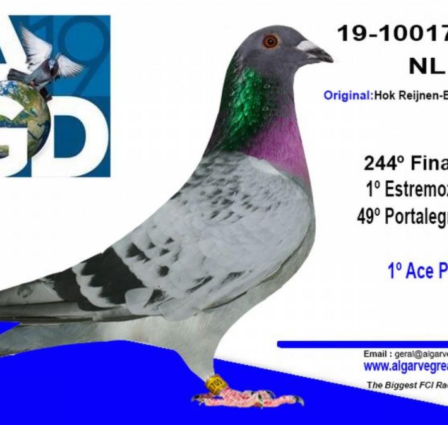 DV-05927-541 - Zdenek Pavlik Team 4