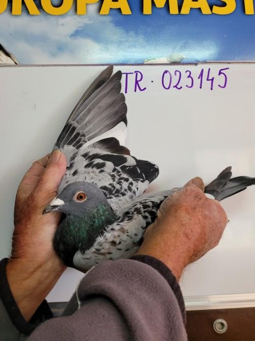 104th place - 023145-TR-21 - Karakurt Pigeons FCI Team A