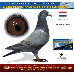 Auction 1259719-NL-19 Bert Ploeg FCI Team A