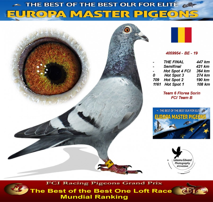 Auction 4059954-BE-19 Team 6 Florea Sorin FCI Team B