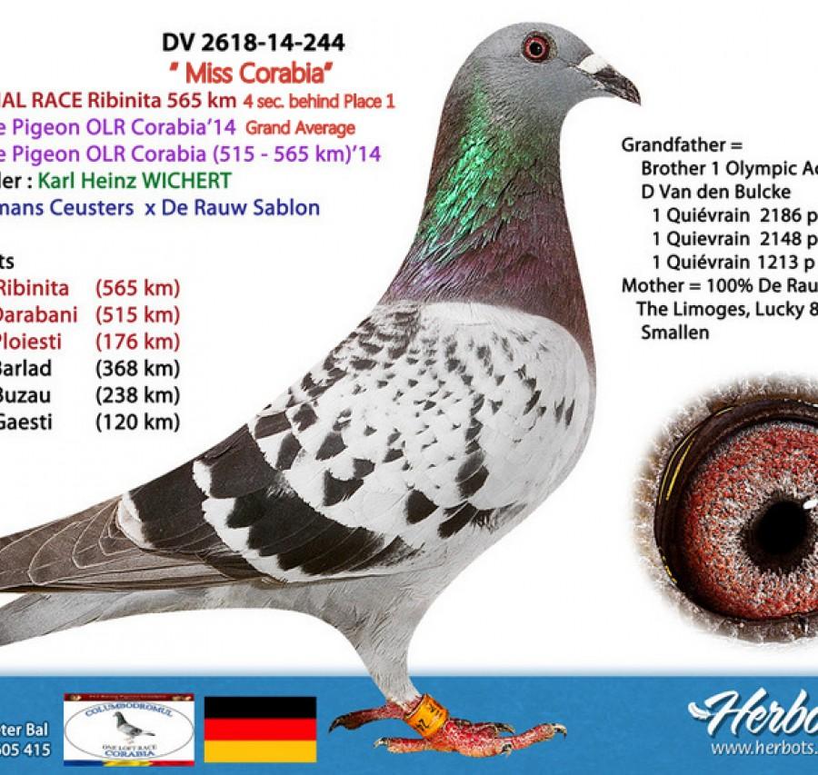 68th place - Karl-Heinz Wichert Team 1 FCI Team A