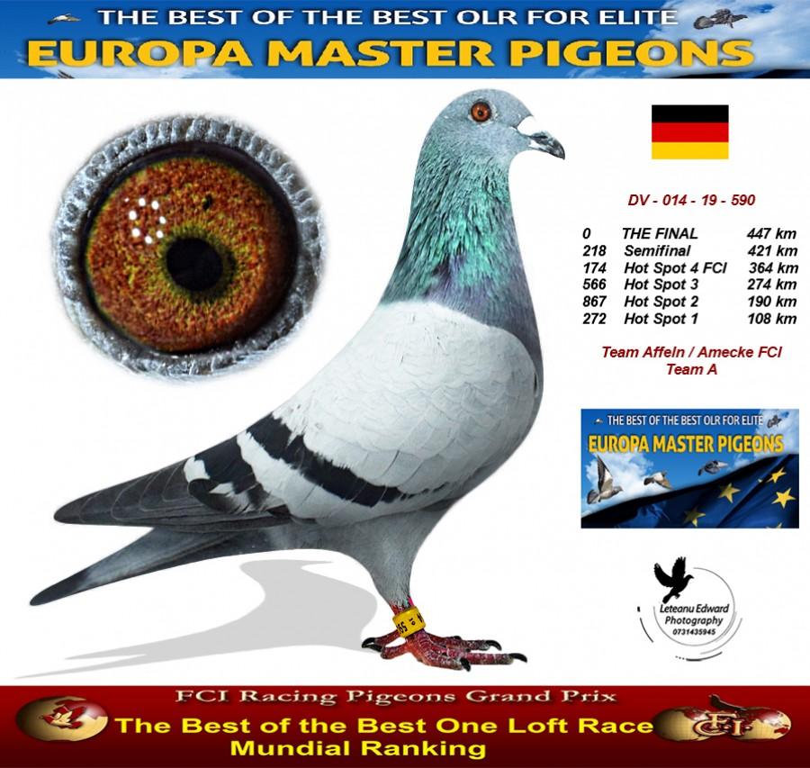 Auction DV-014-19-590 - Team Affeln / Amecke FCI Team A