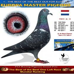 264th place - Dr de Weerd Pigeons Team 4 FCI Team A
