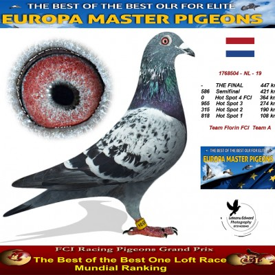 Auction 1768504-NL-19 - Team Florin FCI Team A
