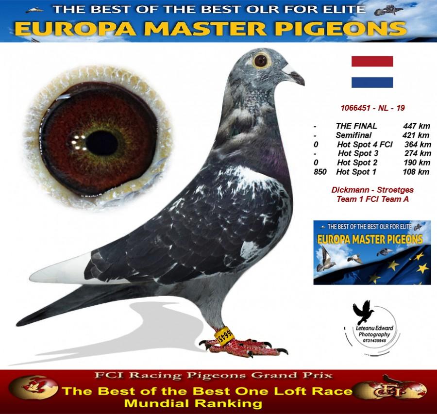 Auction 1066451-NL-19 - Dickmann - Stroetges Team 1 FCI Team A