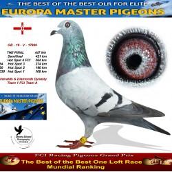 Auction GB-19-V-17869 - Emeralds & Diamonds Dynasty Team 1 FCI Team A