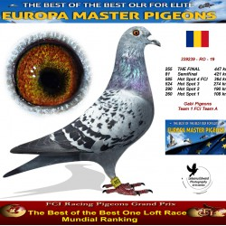255th place - Gabi Pigeons Team 1 FCI Team A