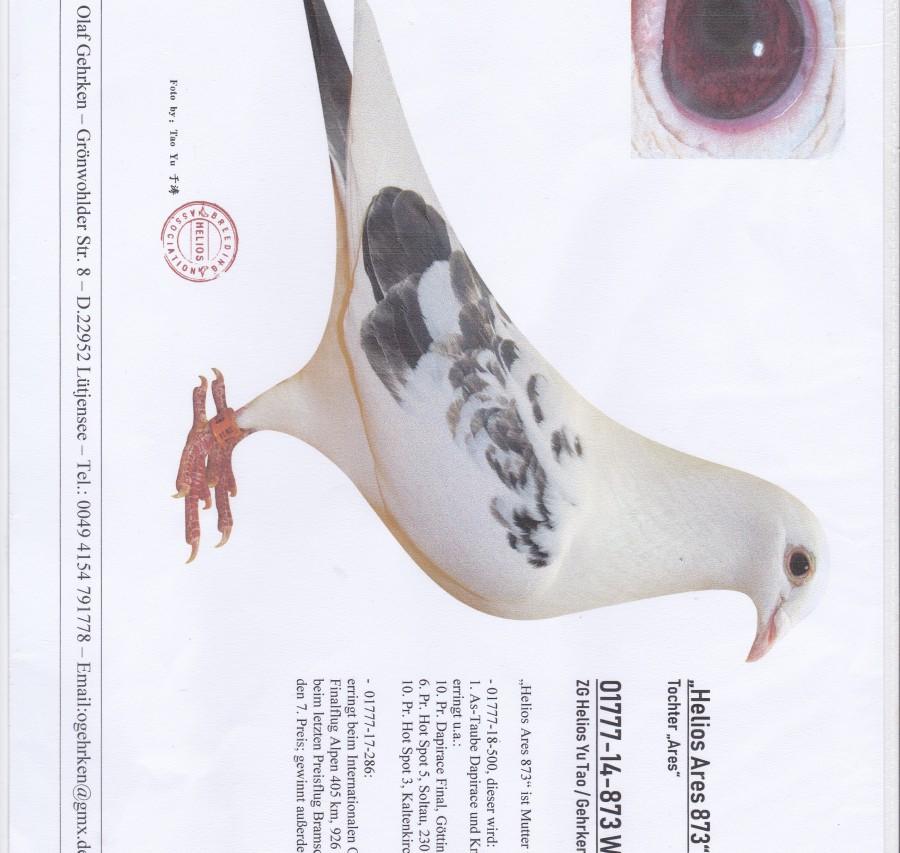 Auction DV-01777-398 - Gehrken u. Sohne