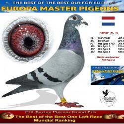 14th place - Harrie van Boxmeer  FCI Team A